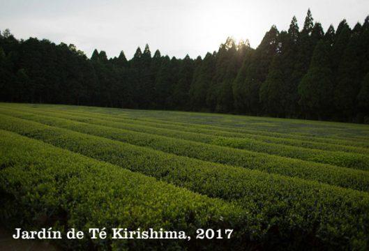 Kirishima tea garden.